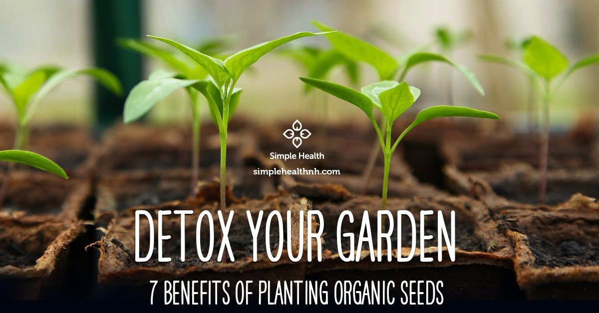 7 Benefits of Planting Organic Seeds