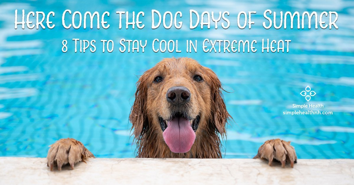 Here Come the Dog Days of Summer