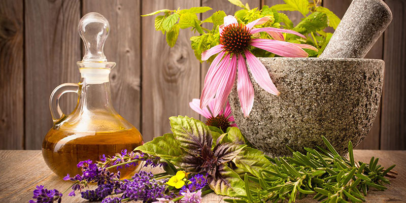 Herbs and Plants as Medicine